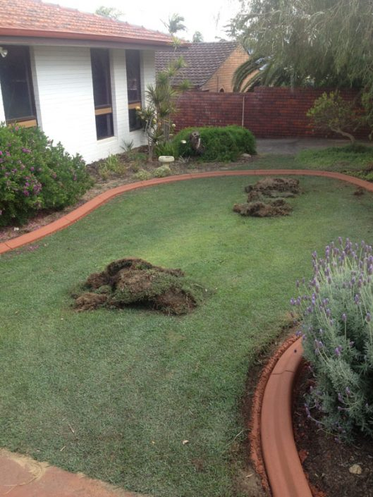 lawn edging in Wembley, Perth